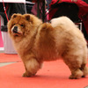 News - Chows - 2015 - Fribourg - Unicca-3