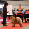 News - Chows - 2015 - Fribourg - Unicca-4