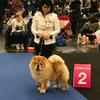 News - Nürnberg 2017 - Precious Pearl de los Perros de Bigo-3