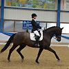 News - Pferde - 2014 - Turniersaisonauftakt