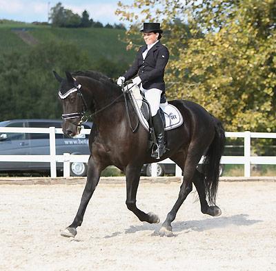 News - Pferde - 2015 - Schweizer Meisterschaft