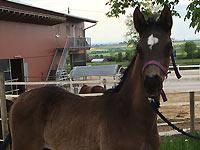 Pferde - Fürstin von Worrenberg