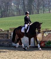 New - Pferde - 2019 - Dressurtage Birmensdorf ZH