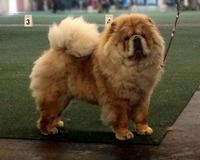 Unsere Hunde: Precious Pearl de los Perros de Bigo-3