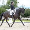 Unsere Pferde - Bilder 2016-2