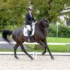 Unsere Pferde - Bilder 2016-5