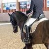 Unsere Pferde - Bilder 2017-3 - Rendezvous, Aarau