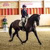 Unsere Pferde - Bilder 2017-5 - Rendezvous, Aarau