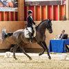 Unsere Pferde - Bilder 2017-6 - Rendezvous, Aarau