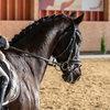 Unsere Pferde - Bilder 2017-10 - Rendezvous, Aarau
