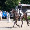 Unsere Pferde - Bilder 2017-5