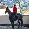 Unsere Pferde - Bilder 2017-10