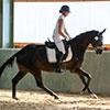 Unsere Pferde - Bilder 2019 - Stutenleistungsprüfung Blaubeuren (D)-5