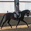 Unsere Pferde - Bilder 2019 - Stutenleistungsprüfung Blaubeuren (D)-4