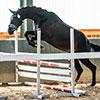 Unsere Pferde - Bilder 2019 - Stutenleistungsprüfung Blaubeuren (D)-2
