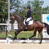 Unsere Pferde - Bilder 2019 - Fürstin-11