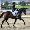 2020 - Pferdebilder - September-2