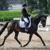 2020 - Pferdebilder - September-4