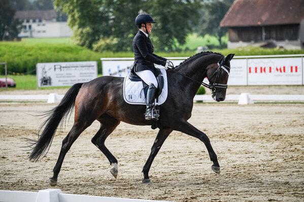 2020 - Pferdebilder - September Spotlight 2