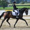 2020 - Pferdebilder - September-10