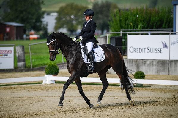 2020 - Pferdebilder - September Spotlight