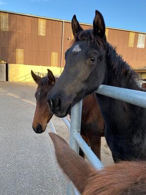 2020 - Pferdebilder - Oktober - Vaiana