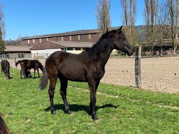 2021 - Pferdebilder - April - Vaiana-3