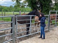 News - Pferde - 2021 - Mai 2021 Besuch auf der Fohlenweide-3