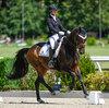 2021 - Pferdebilder - Juni - Grüningen - Dreamy-2