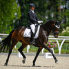 2021 - Pferdebilder - Juni - Grüningen - Dreamy-5