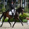 2021 - Pferdebilder - Juni - Grüningen - Dreamy-6