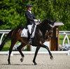 2021 - Pferdebilder - Juni - Grüningen - Dreamy-8