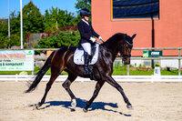 2021 - Pferdebilder - September-9