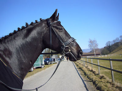 News - Pferde - 2009 - Rendezvous Möhlin