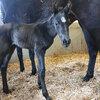2020 - Pferdebilder - Februar - Vaiana kurz nach der Geburt