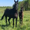 2020 - Pferdebilder - Mai - Fürstin und Vaiana