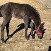2020 - Pferdebilder - März - Vaiana lange Beine
