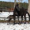2020 - Pferdebilder - Februar - Vaiana juhui im Schne