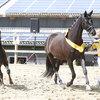 2020 - Pferdebilder - Juni - Fürstin und Vaiana