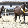 2020 - Pferdebilder - Juni - Fürstin und Vaiana-3