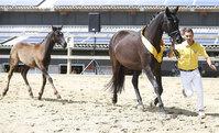 2020 - Pferdebilder - Juni - Fürstin und Vaiana-4