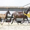 2020 - Pferdebilder - Juni - Fürstin und Vaiana-5