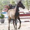2020 - Pferdebilder - Juni - Fürstin und Vaiana-7
